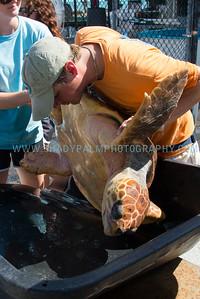 Turtle-1068