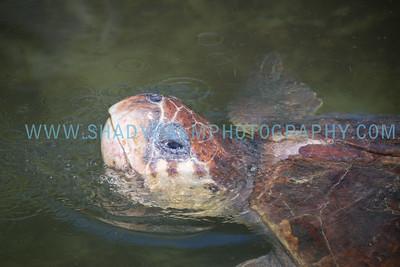 Turtle-1037