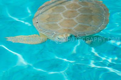 Turtle-1003
