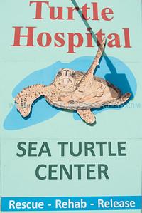 Turtle-1055