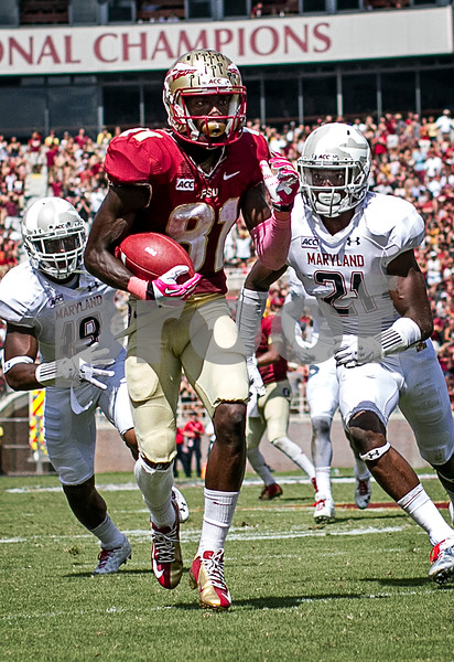 Kenny Shaw nearly scores as he pulls in one of his 5 receptions on the day. The Seminoles crushed the Maryland Terrapins 63-0 Saturday at Doak Campbell stadium.  The 'Noles will have a bye week next week and will spend the next two weeks preparing for the big showdown in Death Valley against the Clemson Tigers.