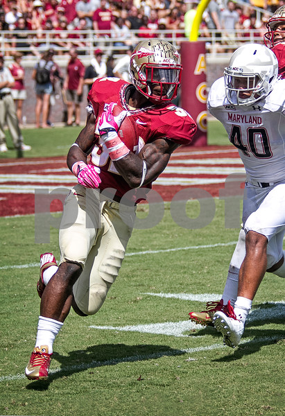 James Wilder Jr gets around the edge for a gain in Saturday's game. The Seminoles crushed the Maryland Terrapins 63-0 Saturday at Doak Campbell stadium.  The 'Noles will have a bye week next week and will spend the next two weeks preparing for the big showdown in Death Valley against the Clemson Tigers.