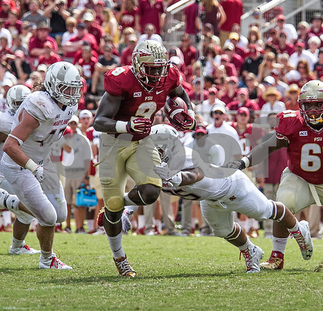 RB Karlos Williams runs past a diving Maryland defender for a 17 yard TD run . Williams had 2 rushing TD's on the day.  The Florida State Seminoles crushed the Maryland Terrapins 63-0 Saturday at Doak Campbell stadium.  The 'Noles will have a bye week next week and will spend the next two weeks preparing for the big showdown in Death Valley against the Clemson Tigers.