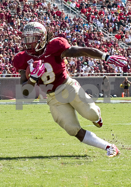 RB Devonta Freeman makes a hard cut on his way to the endzone Saturday.  Freeman ended up a half yard short but the Seminoles dominated the Maryland Terrapins 63-0 at Doak Campbell stadium.  The 'Noles will have a bye week next week and will spend the next two weeks preparing for the big showdown in Death Valley against the Clemson Tigers.