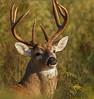 With this photo I bid this buck adieu until fall 2013 when I hope to see him again as a 10 point buck.