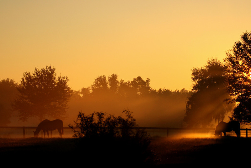 Horses at Rock Springs Run