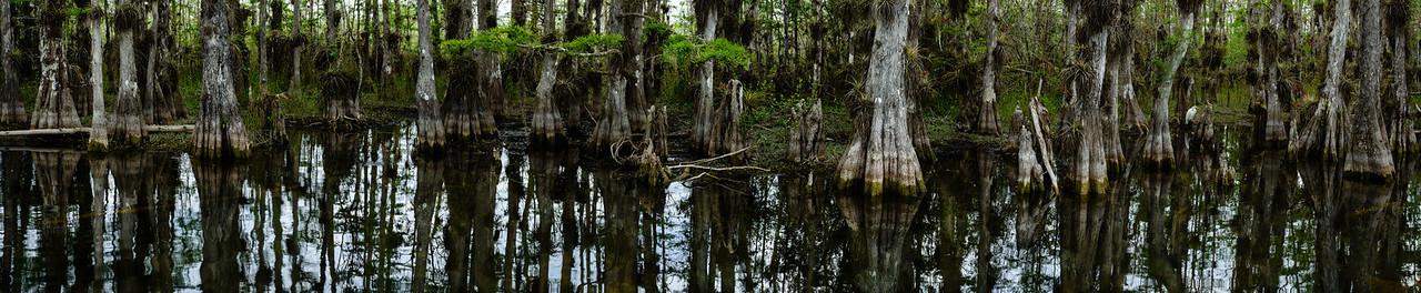 Big Cypress Swamp Panorama