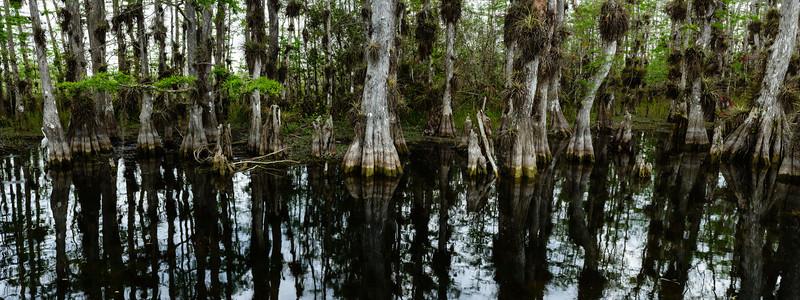 Big Cypress Swamp Panorama 2
