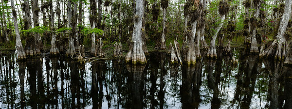 Big Cypress Swamp Panorama 2