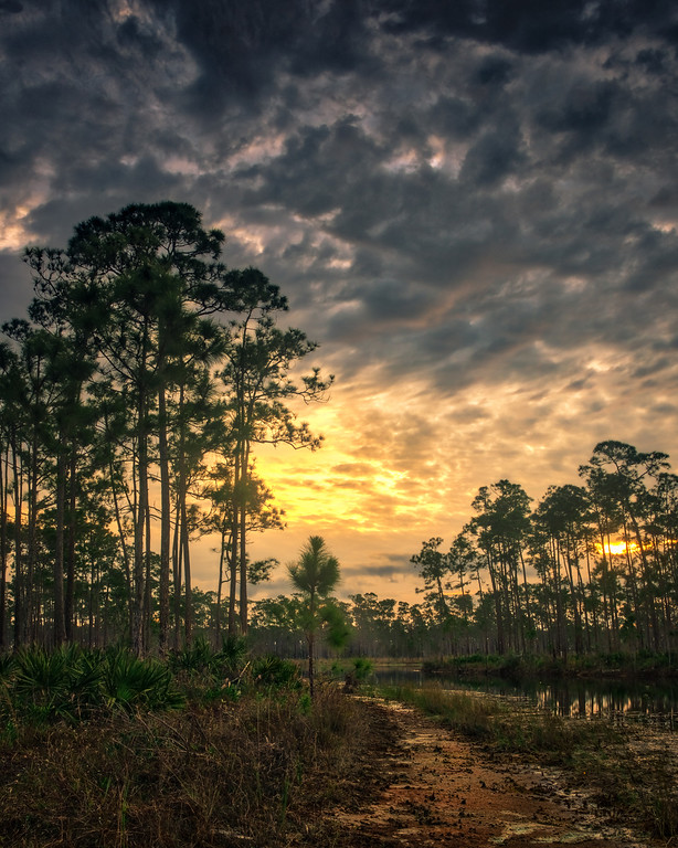 Photography in the Everglades and south Florida