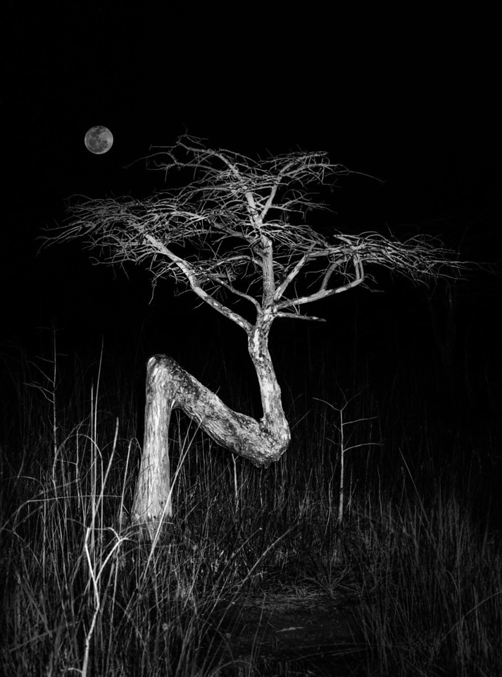 Moon over the Z Tree
