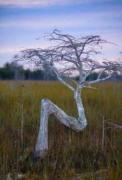 The Z Tree