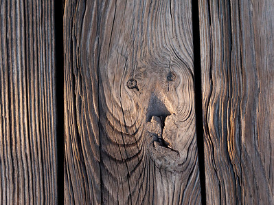 The weathered boards of the Green Cay boardwalk seem to have sculpted a lion's face.