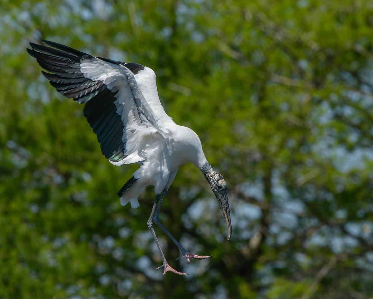 Landing on the nest.