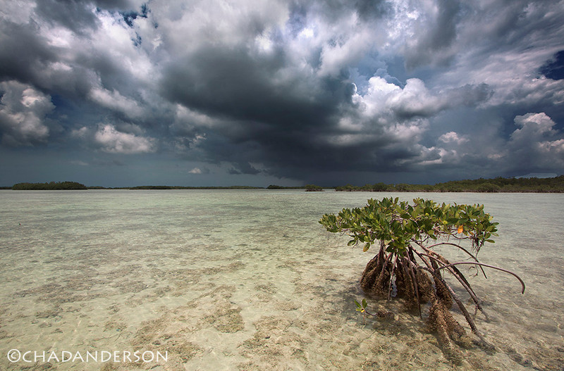 """Take Cover""<br /> <br /> Summer storm envelops Florida Bay in the Great White Heron Refuge."