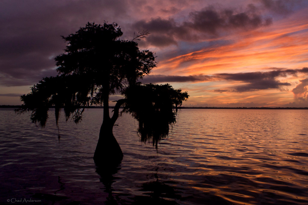 """Blue Cypress Lake Sunrise"""