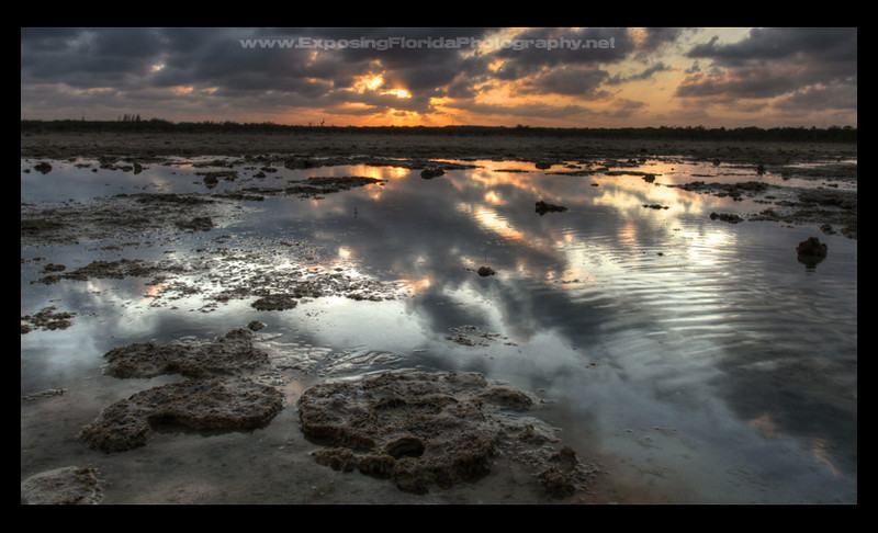 """Rock Barrens""<br />  National Key Deer Refuge, Cudjoe Key"