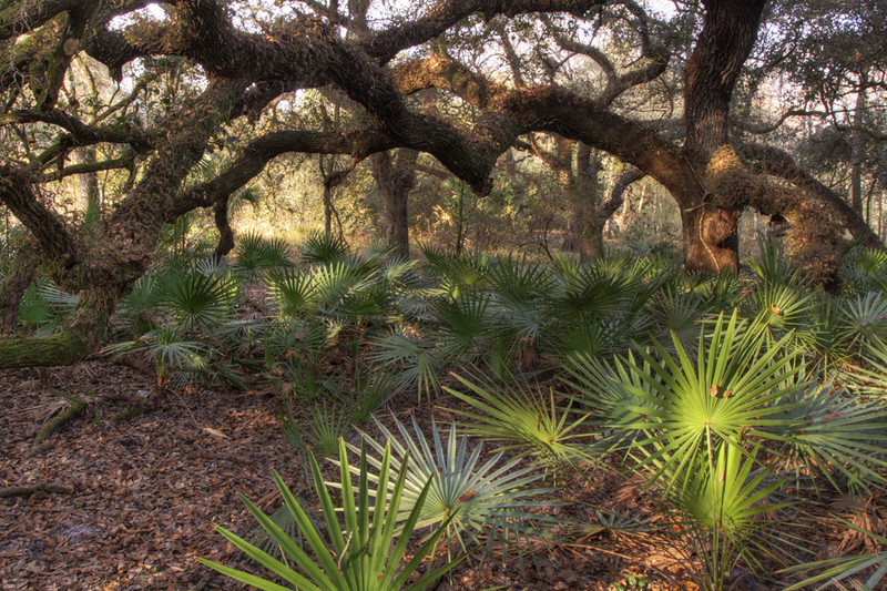 Live Oak Forest, Dade City
