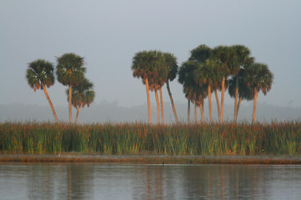 Sunrise and Fog on the Shores of Lake Toho