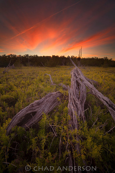 """Salt Marsh Sunset""<br /> <br /> Everglades National Park"