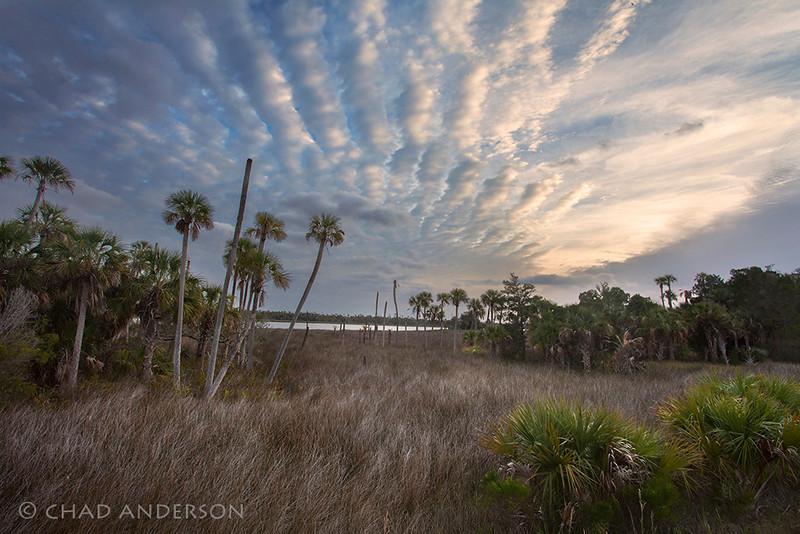 """Palm Coast""<br /> <br /> Crystal River, Florida"