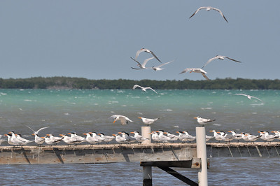 """Where Nobody Knows the Time or Place"" – on No Name Key in southern Florida, time seems to pass a little slower. None of these birds were complaining."