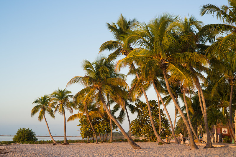 Palm Trees at Smathers Beach, Key West