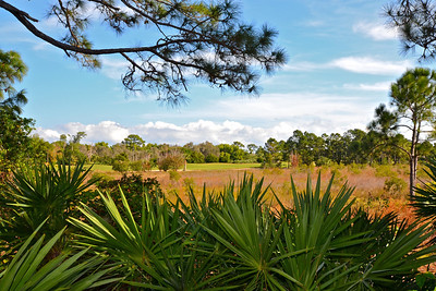 Nature preserve in Stuart