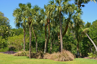 The Kampong is located in Coconut Grove, Florida adjoining Biscayne Bay.  The former home of Dr. David Fairchild is now a privately owned Tropical Botanical Garden that is open to the public on a limited basis and used for many educational seminars and programs.