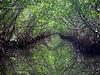 Woolverton Kayak Trail, Placida FL