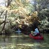 Juniper Springs kayaking - crystal clear water!