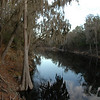 Suwannee River in the morning
