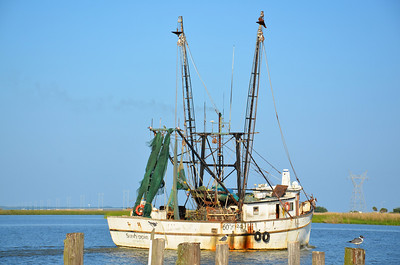 A major industry of the area is shrimping and oyster fishing.