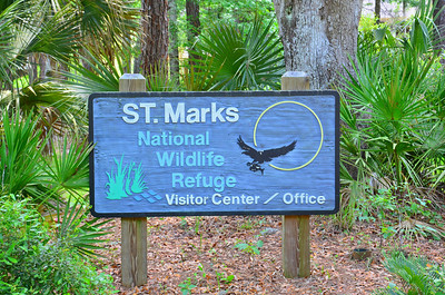 "Located within the St. Marks National Wildlife Refuge is  one of the most photographed landmarks on  Florida's ""Big Bend"" coast;  the St. Marks  Lighthouse.  It has overlooked the waters of  Apalachee Bay since 1832, standing 80-foot tall it was  fashioned of limestone blocks taken from the ruins of a 17th-century fort.  The mouth of the St. Marks River was one of  the most dangerous ports in Florida during  the early 19th century providing access to the port  communities of St. Marks and Port Leon."