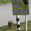 This little owlet appeared to be very curious about what the sign read.