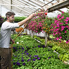 Florists prep for Mother's Day