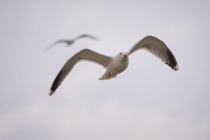 flight | cornwall, uk