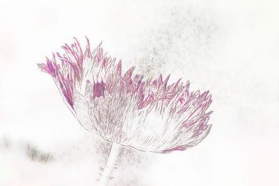 Oriental Poppy IMpression