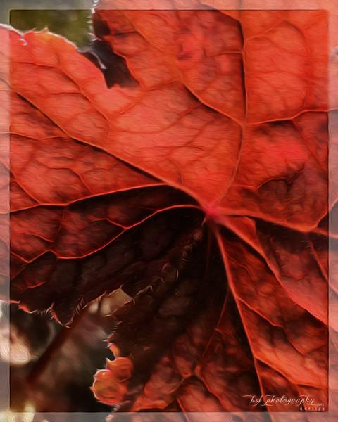 Leaf_2247x8