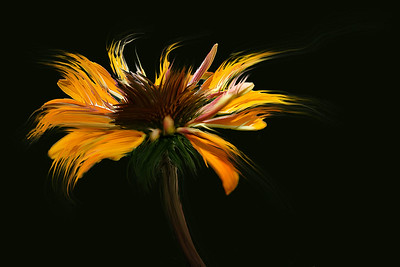 Natural Art Photography