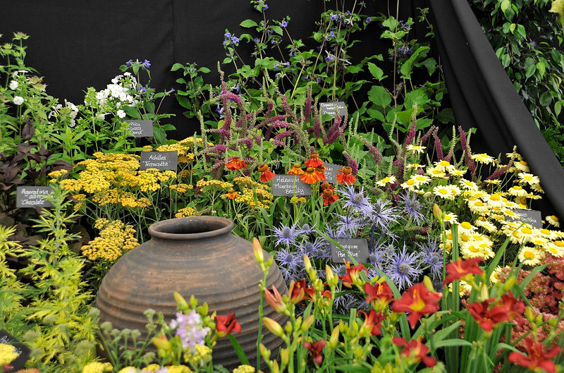 Hampton Court Flower Show - 2014
