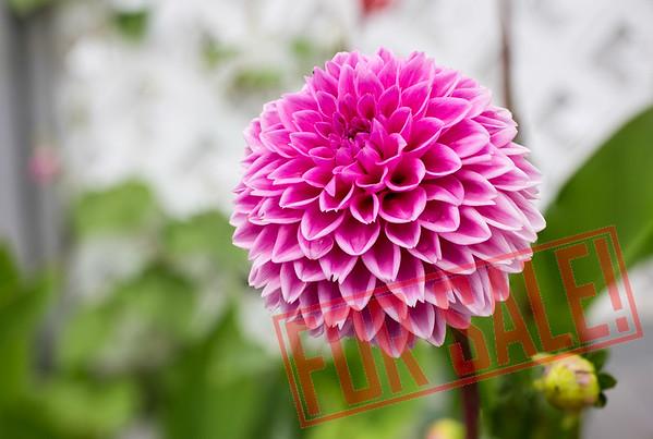 Flower Farden