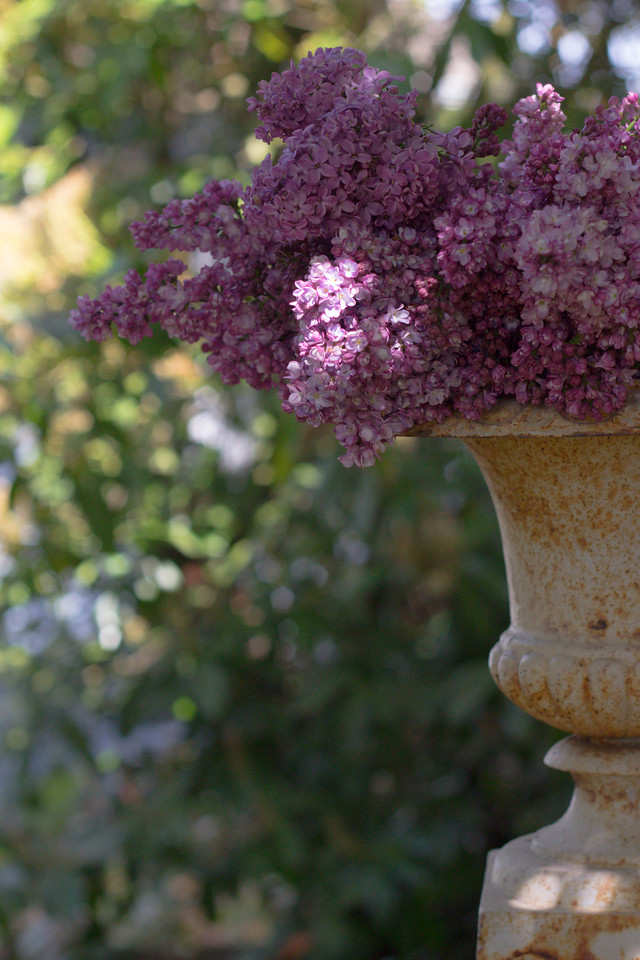 Lilac in vintage urn 2