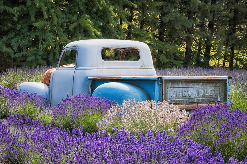 Rollin' through the lavender.