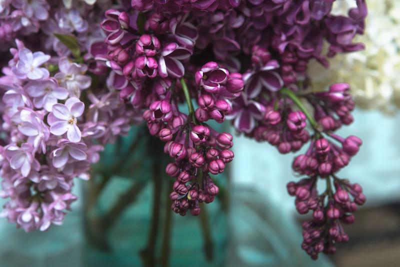 Lilacs in vintage mason jar