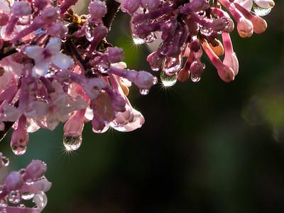 Flower Raindrops With Light Stars
