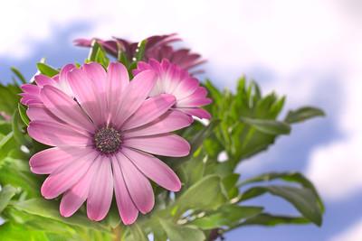 Flower & Plants
