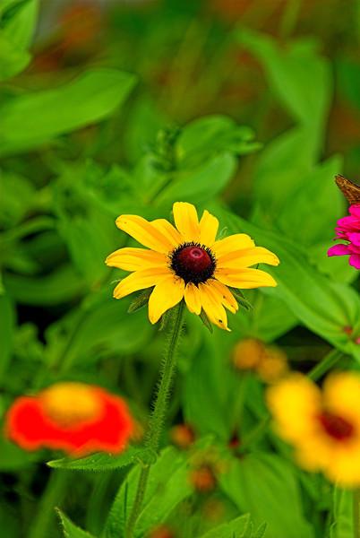 Butterflies Moths and Flowers