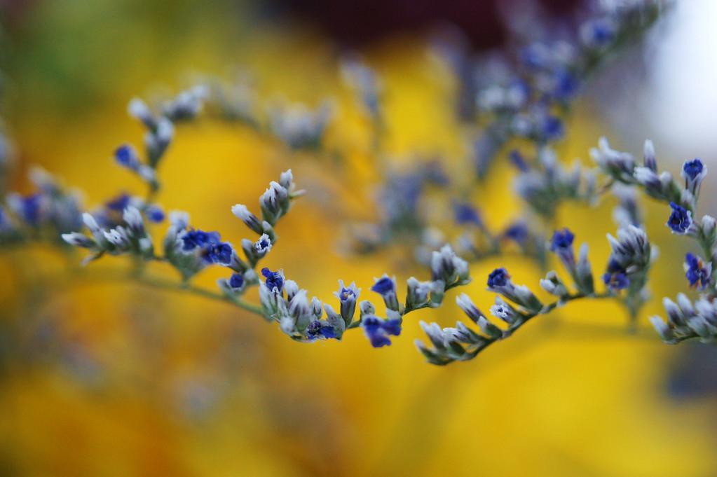 Specks of Blue