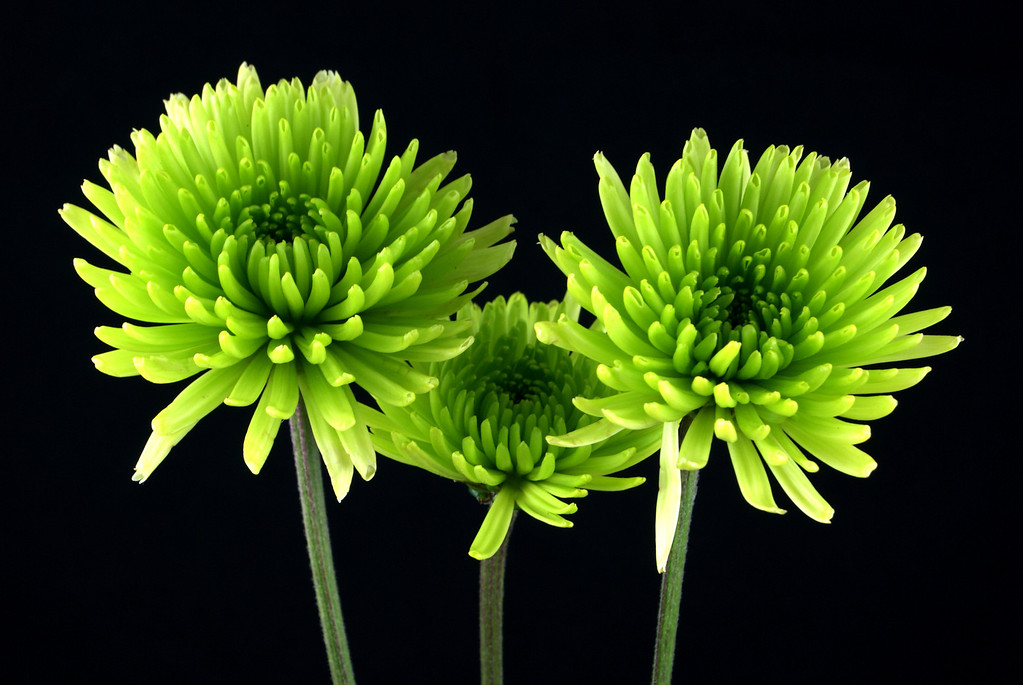 Three Green